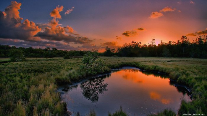 Best Free Nature Wallpapers For Your Desktop